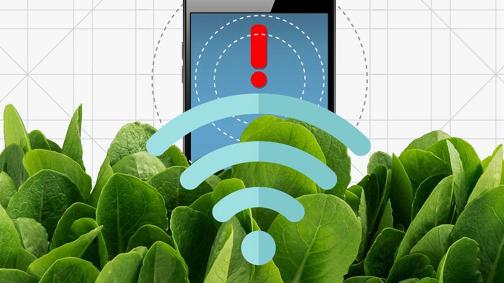 Grafik mit Handy und Spinat