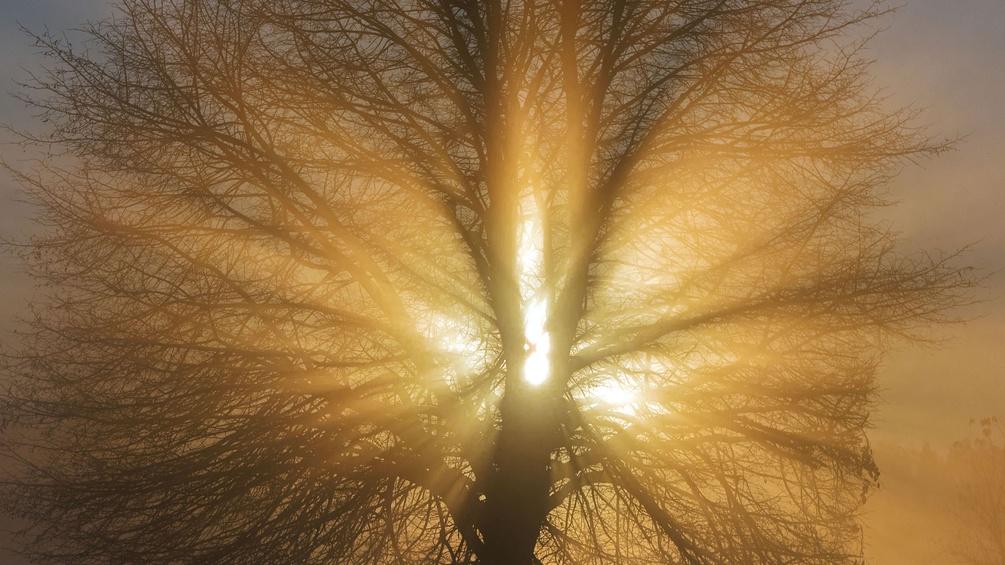 Ein Baum im Gegenlicht