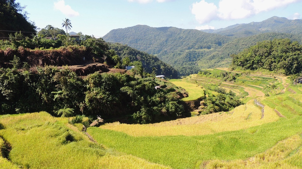 Die Ifugao Reisterrassen von Batad