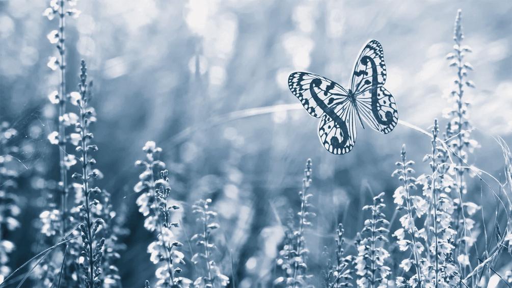 Schmetterling in der Wiese