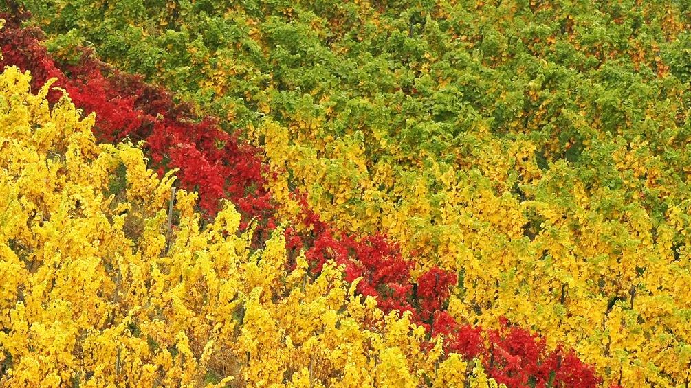 Grüne, gelbe und rote Blätter