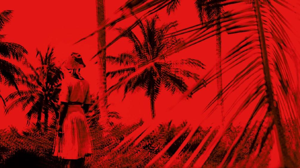 Ausschnitt aus dem Buchumschlag, Mädchen steht vor Palmen