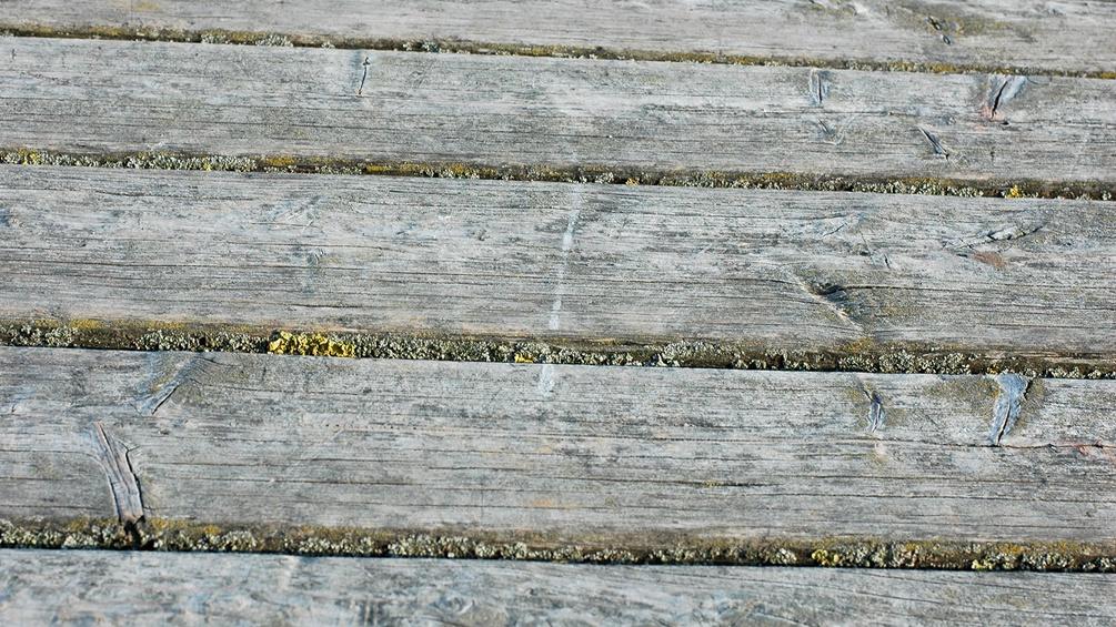 Holzsteg mit Moos in den Fugen