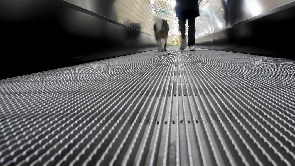 Hund und Mann auf einer Rolltreppe