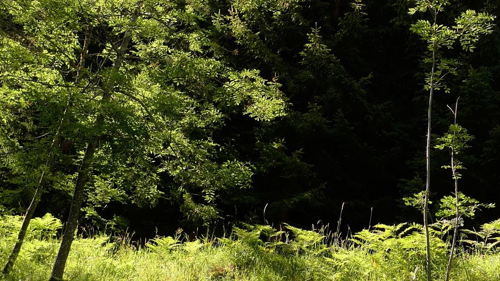 Bäume, Wald und Pflanzen