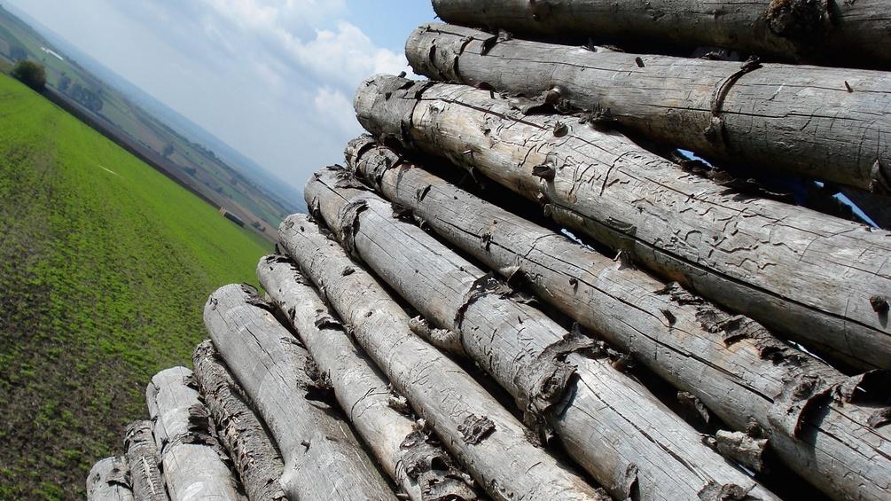 Holzstapel und Sonnenschein, Feld