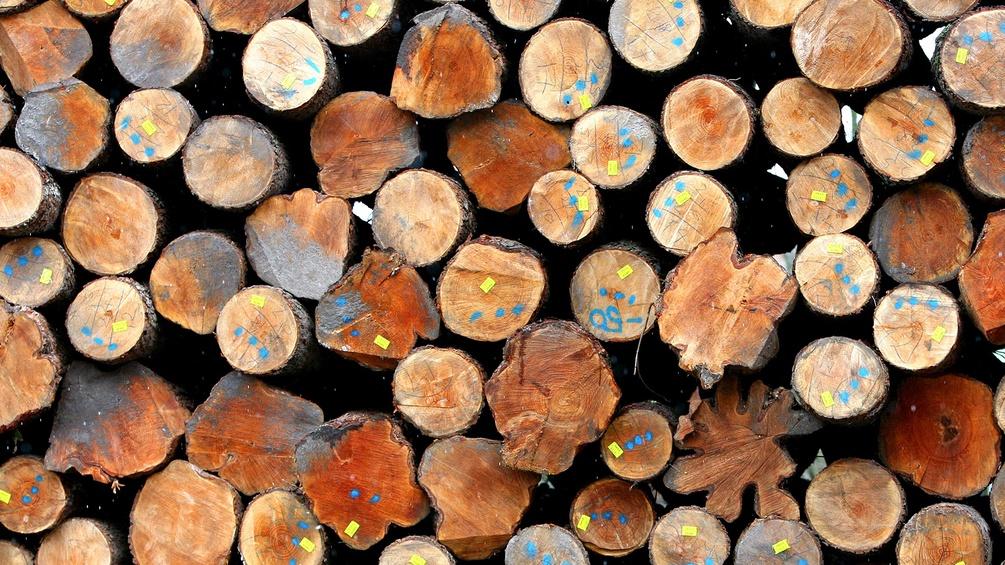 Aufgeschichtete Baumstämme