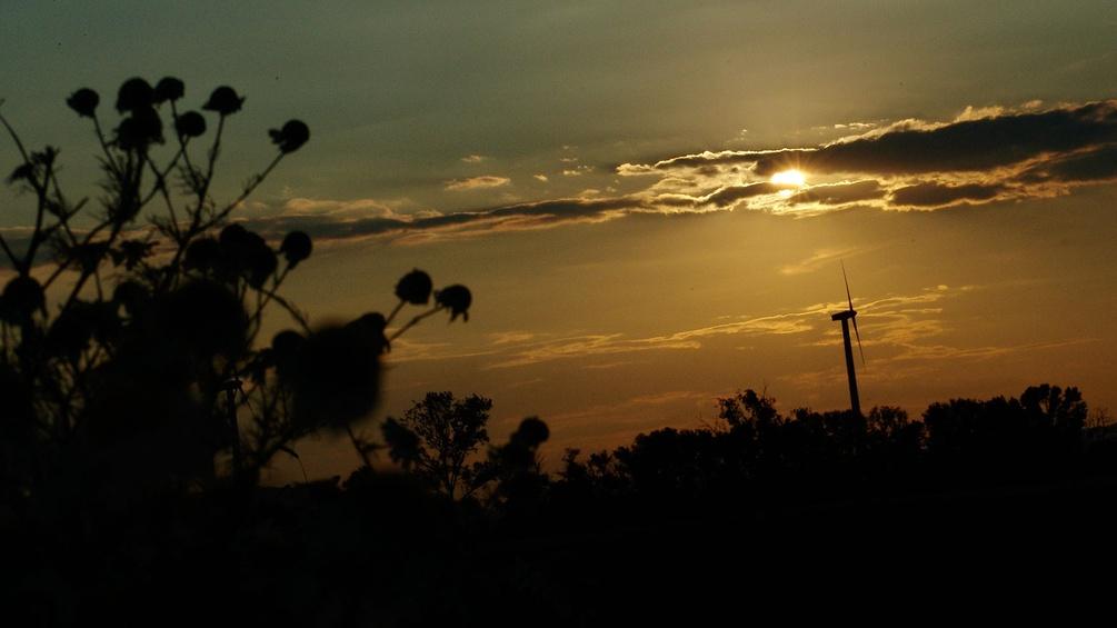 Sonnenuntergang, Feld, Distel, Windrad