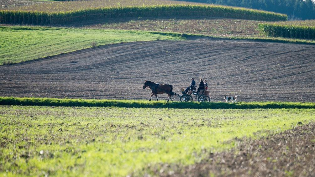 Pferdekutsche auf einem Feldweg