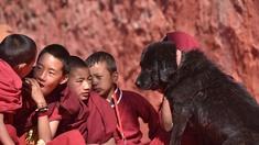 Junge Buddhisten mit Hundewelpen