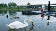 Muslimische Frauen an der Donau, Schwäne und Enten