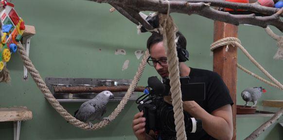 Papagei mit Kameramann