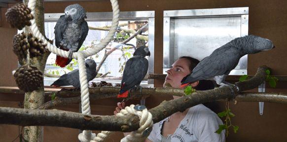 Papageien auf Ästen