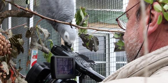 Papagei und Kameramann