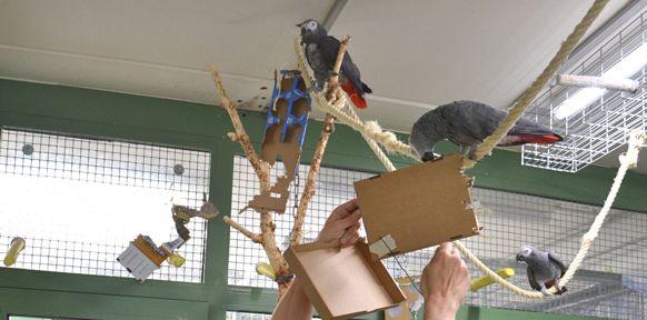 Papageien mit Kartonschachteln