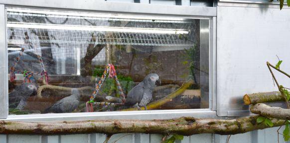 Papageien hinter Fenster