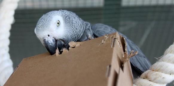 Papagei und Kartonschachtel