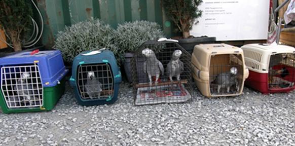 Papageien in Katzenkäfigen