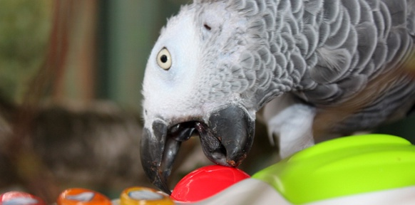 Papagei mit Babyklavier
