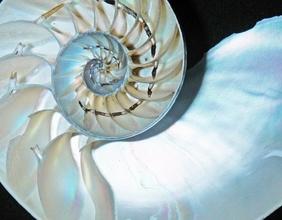 Nautilus, Fossil